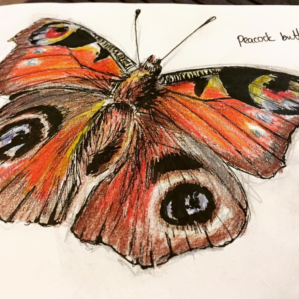 Danni Smith Art - peacock butterfly.jpg