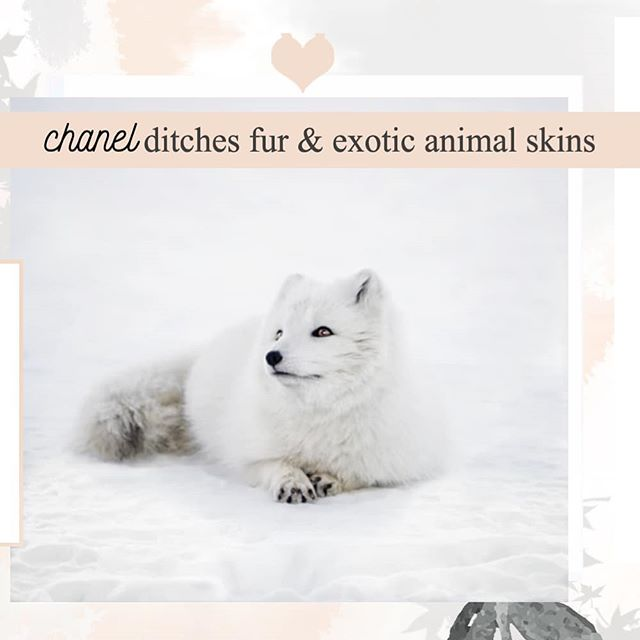 Another luxurious brand ditching fur!! 🎊 Hopefully everyone will follow asap! As much as I think fur belongs only on the animals, I do love the look of #fauxfur! Would live to hear your opinions - do you like faux furs or no and why? 🌸  #furfree #chanel