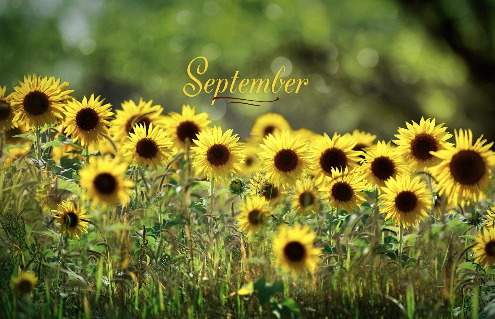 September banner sunflower 1600px.jpg