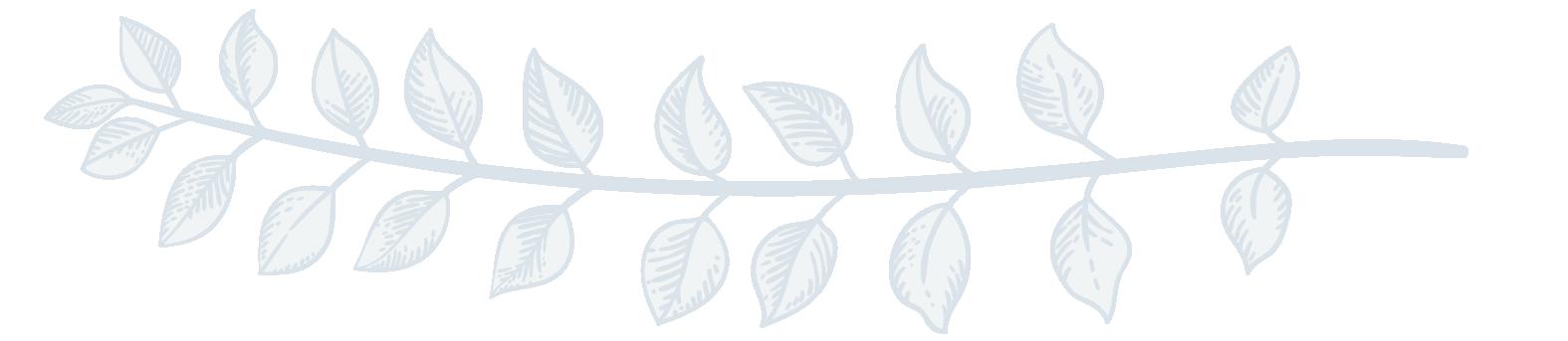 leaf divider 2-02.png