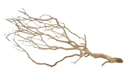 manzanita-branch.jpg