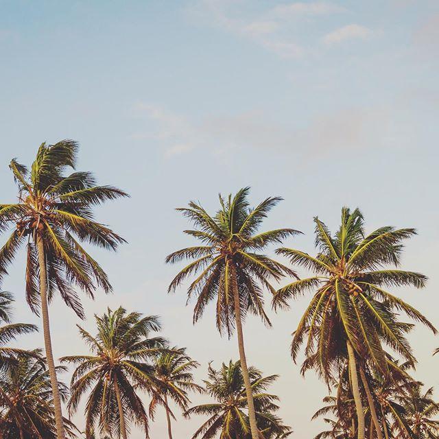 Summer vibes 🍃
