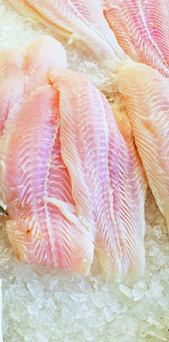 lr-frozen-fishjpg-ck.jpg