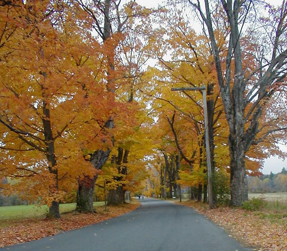 autumnroad.JPG