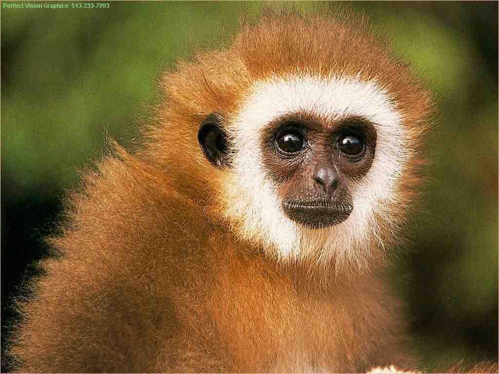 Tony-Wrighton-Monkey-Mind-Blog1.jpg
