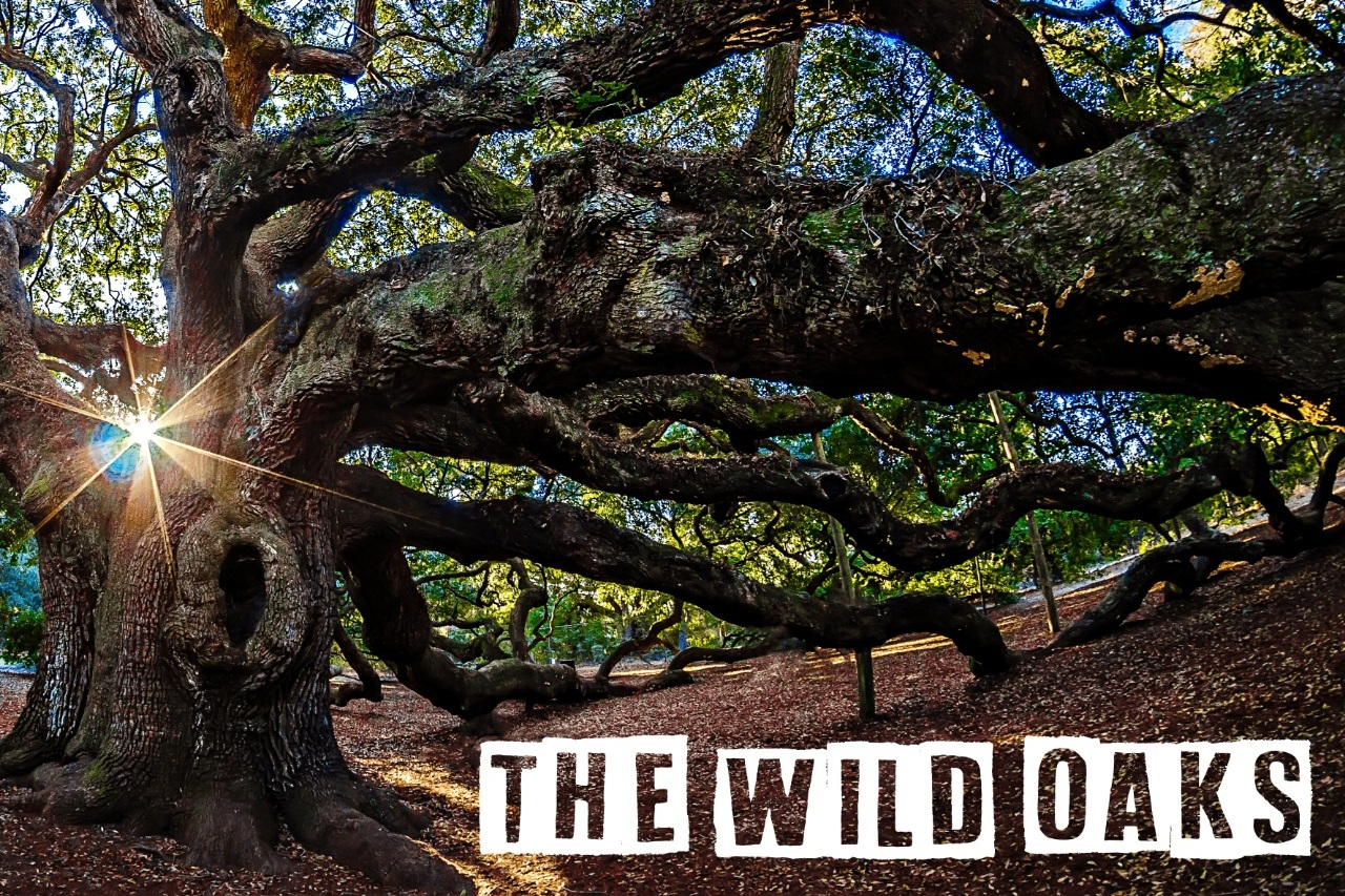 The Wild Oaks - Indie pop/rock from Buenos AiresDownload their single 'Freedom' now!