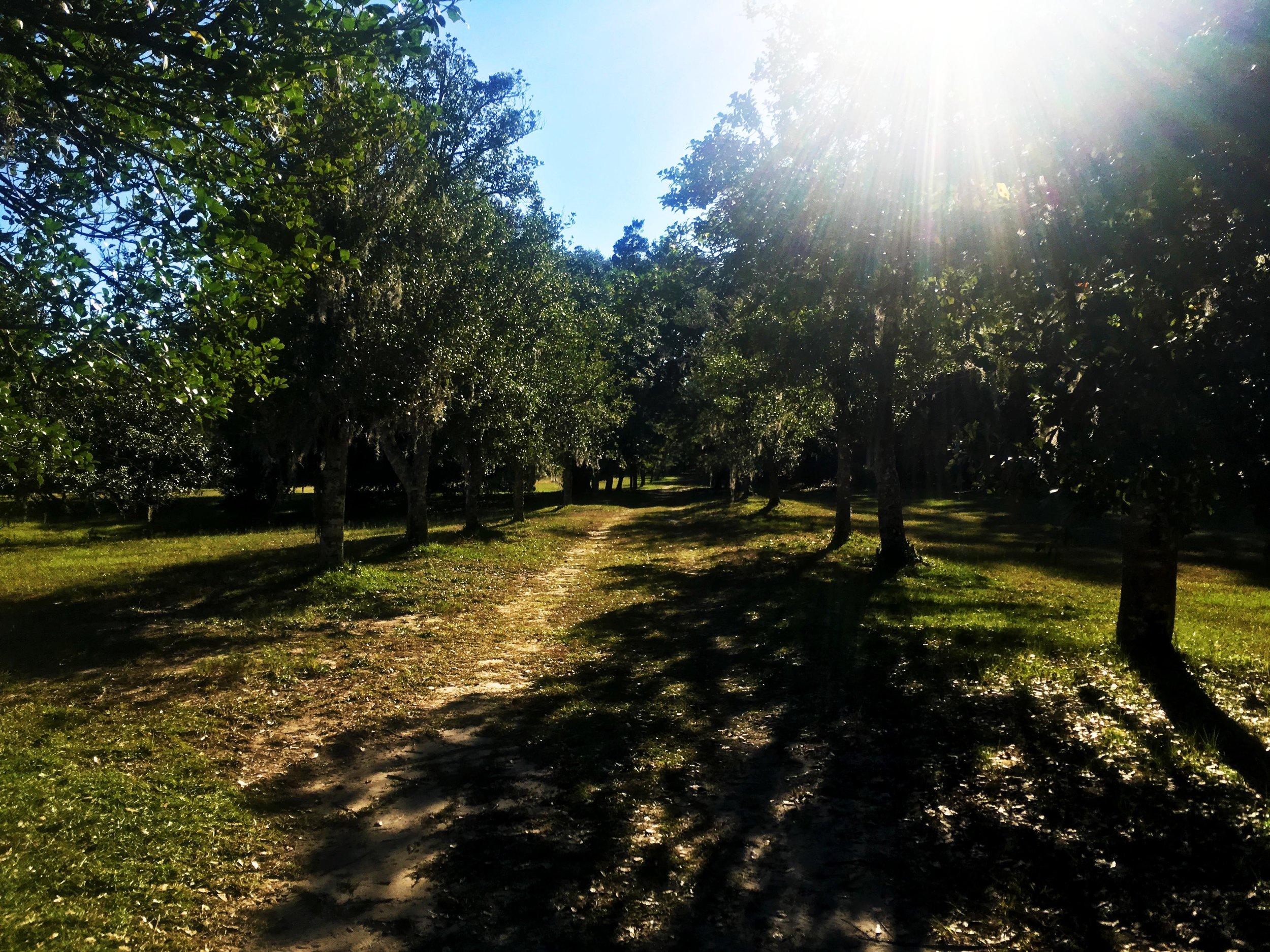 View of Oakland Drive at the Hampton Plantation