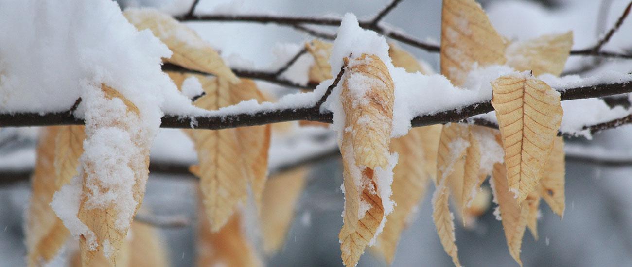 bonnie-leaves-snow.jpg