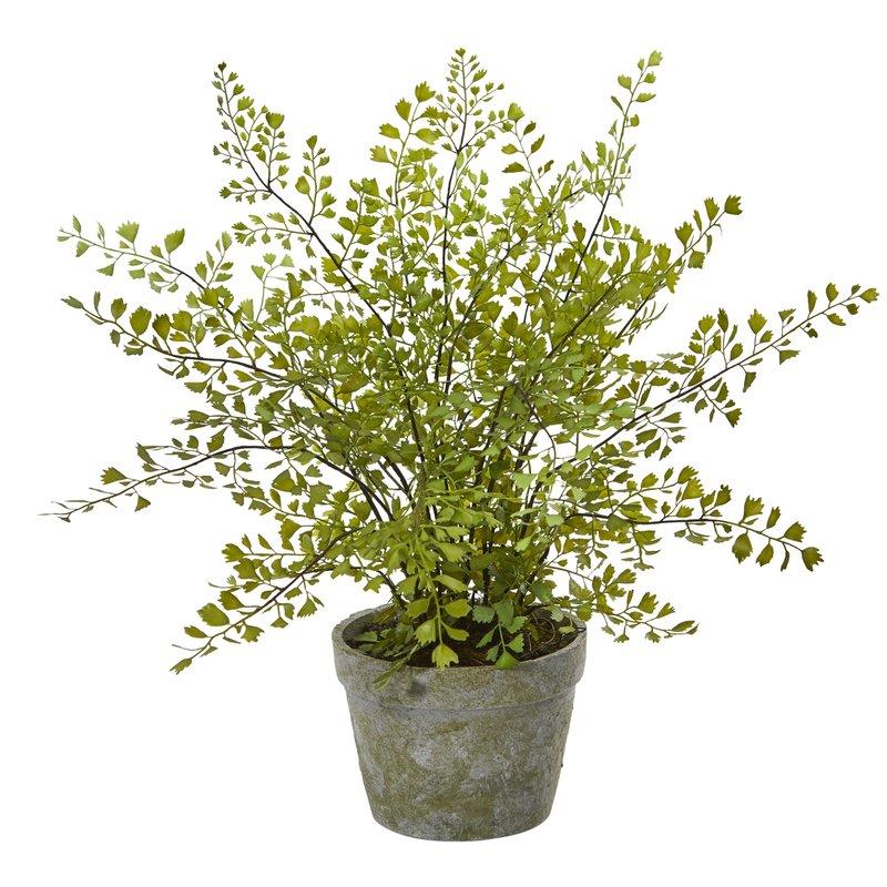 Artificial+Desktop+Maidenhair+Plant+in+Planter.jpg