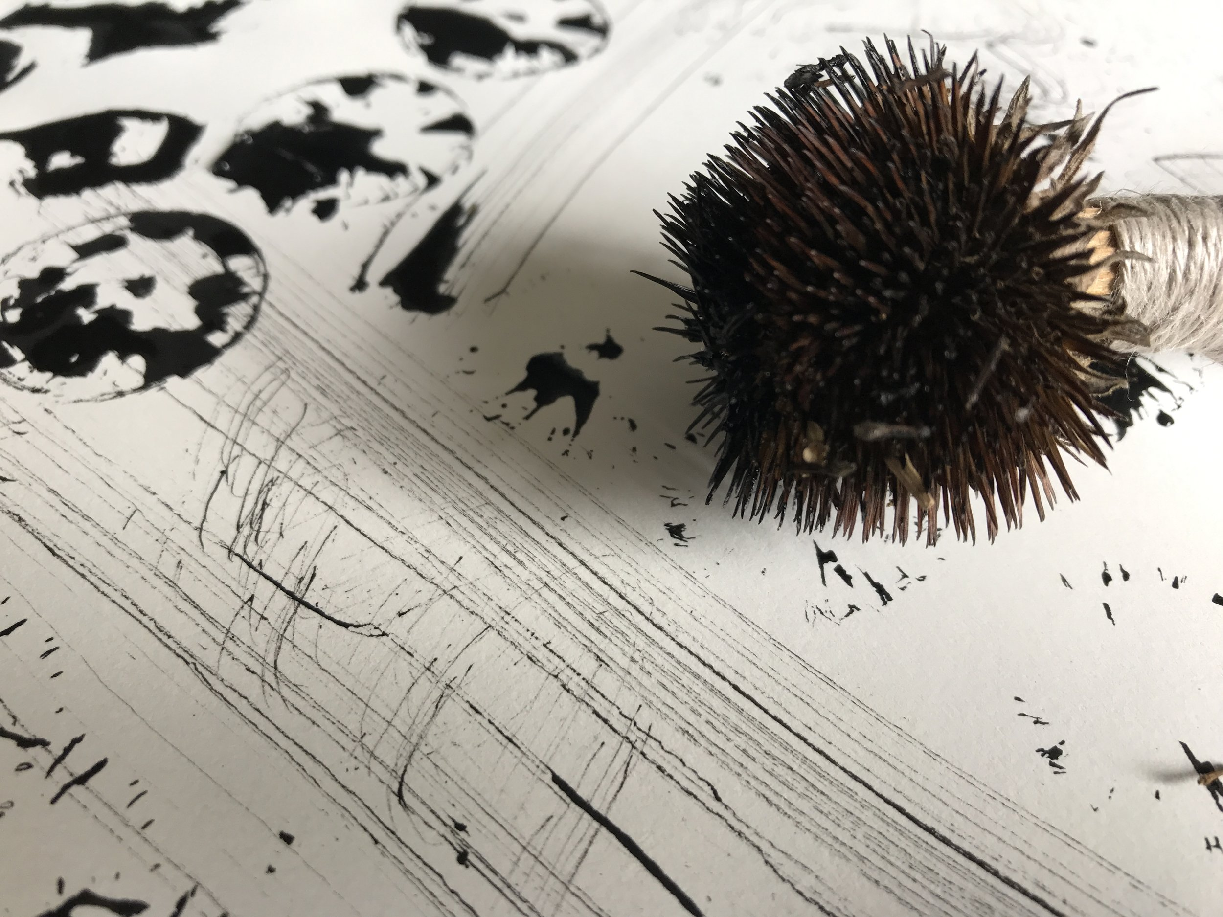 Black ink using dried echinacea seed head
