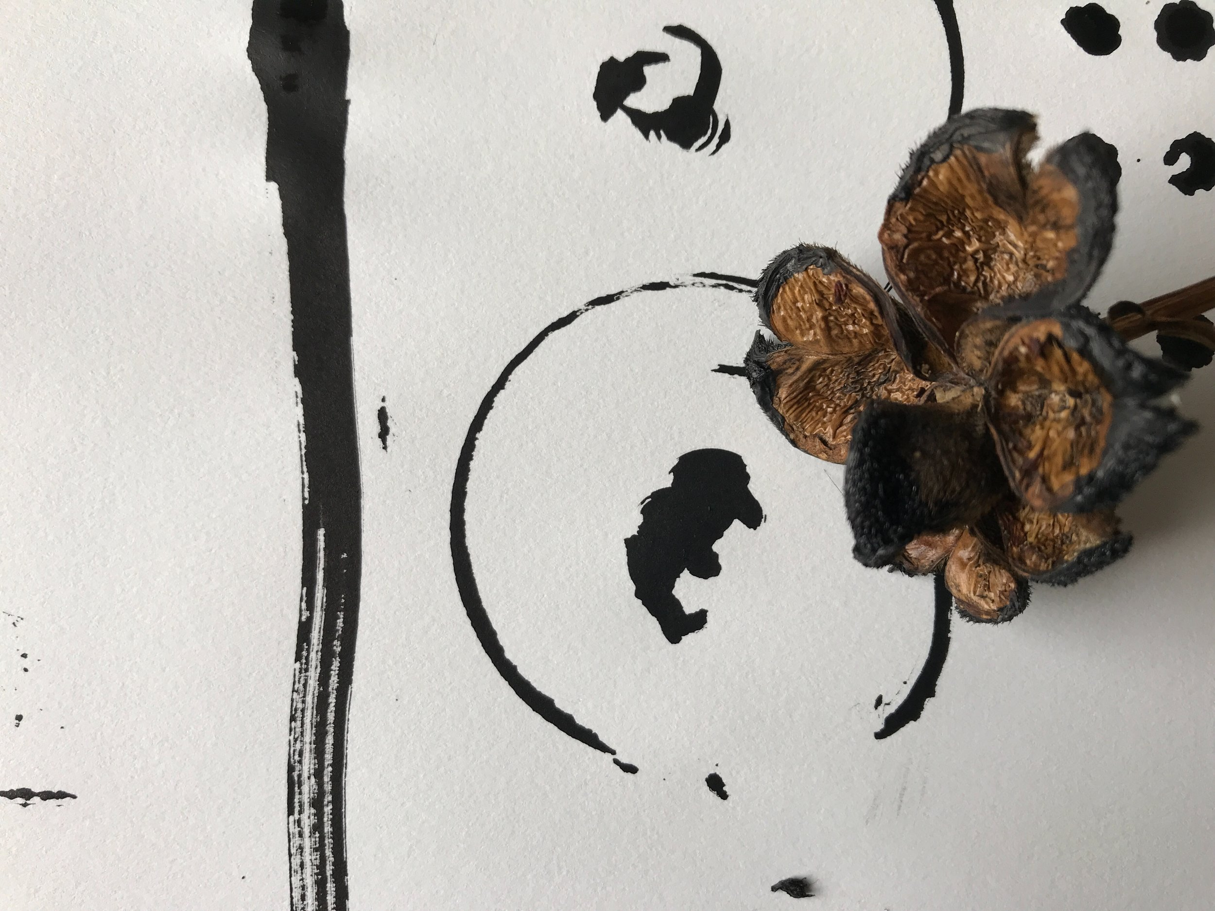 Black ink using dried peony head