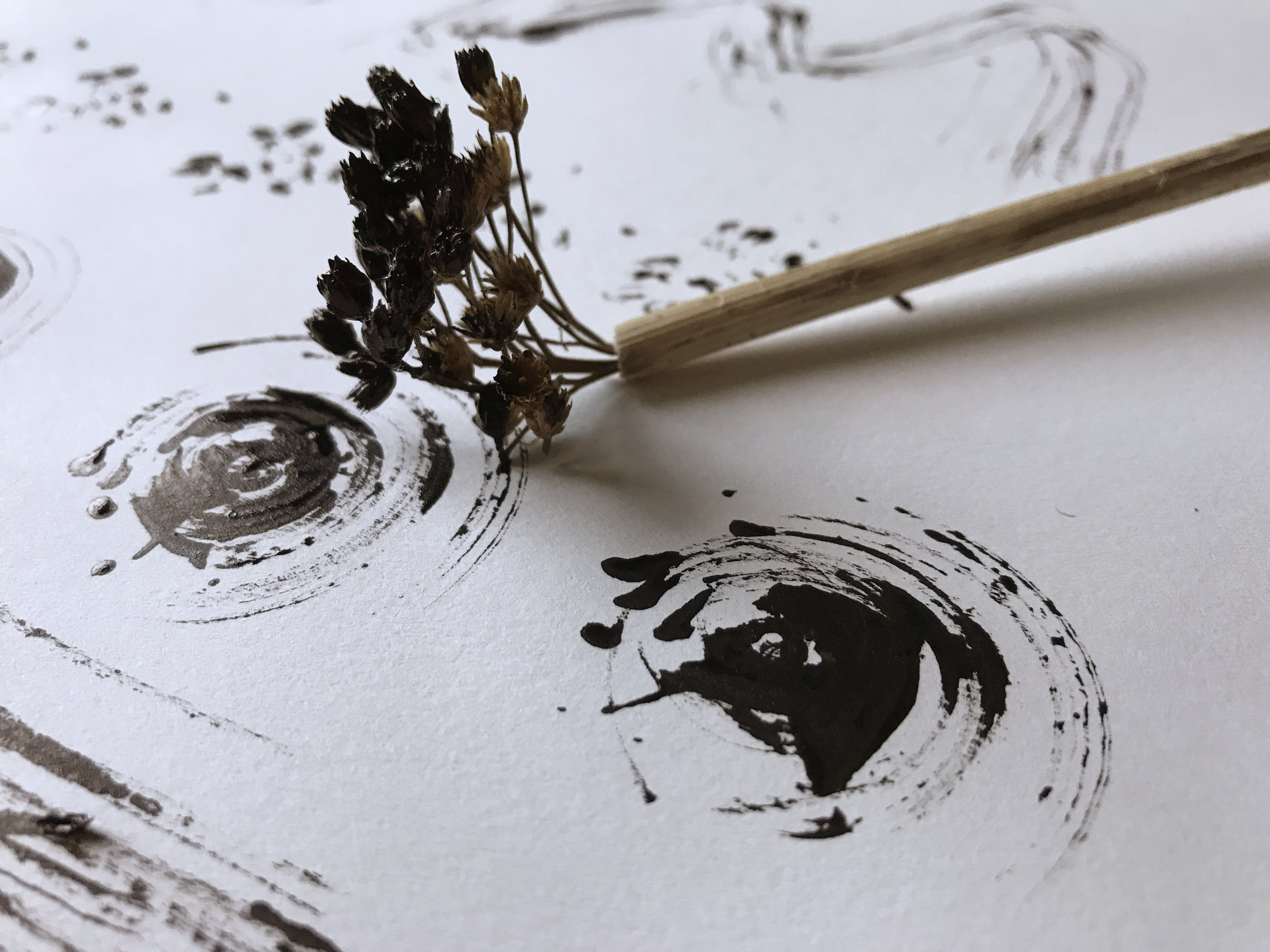 Black ink using dried achillea seed head