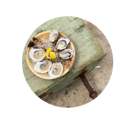 oyster party circle.png