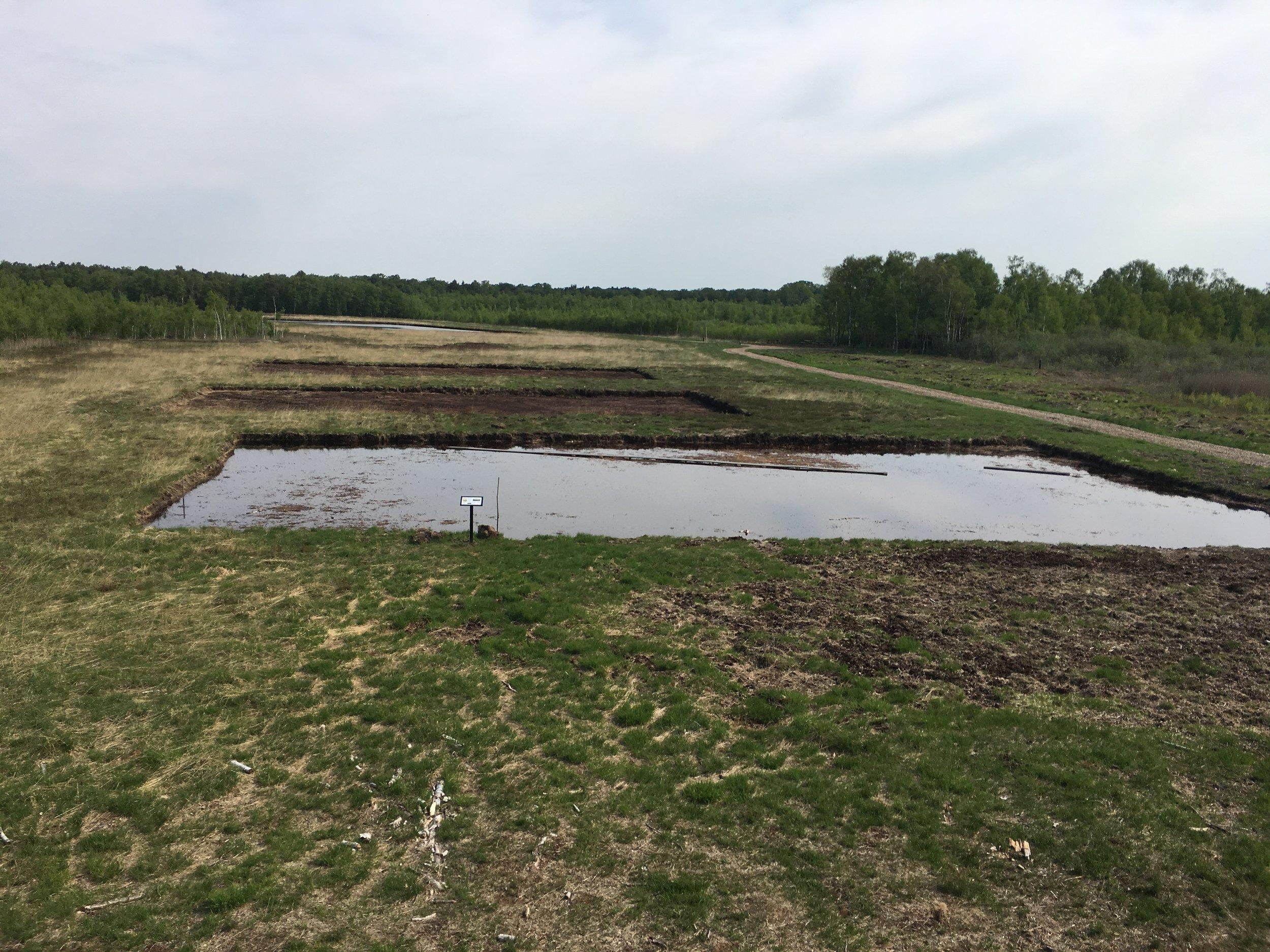 Horreby Lyng, hvor man skar tørv i gamle dage