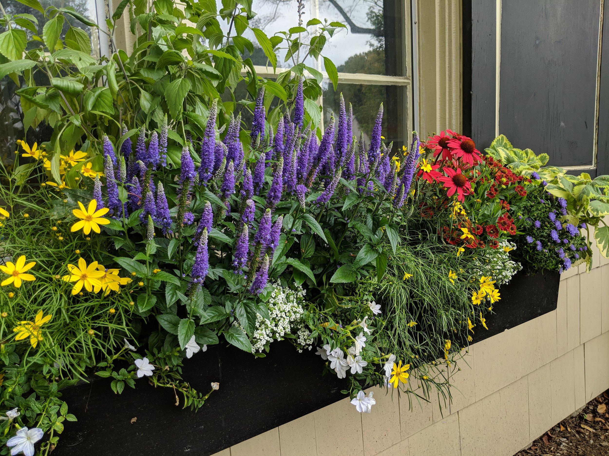 Summer window box in full bloom