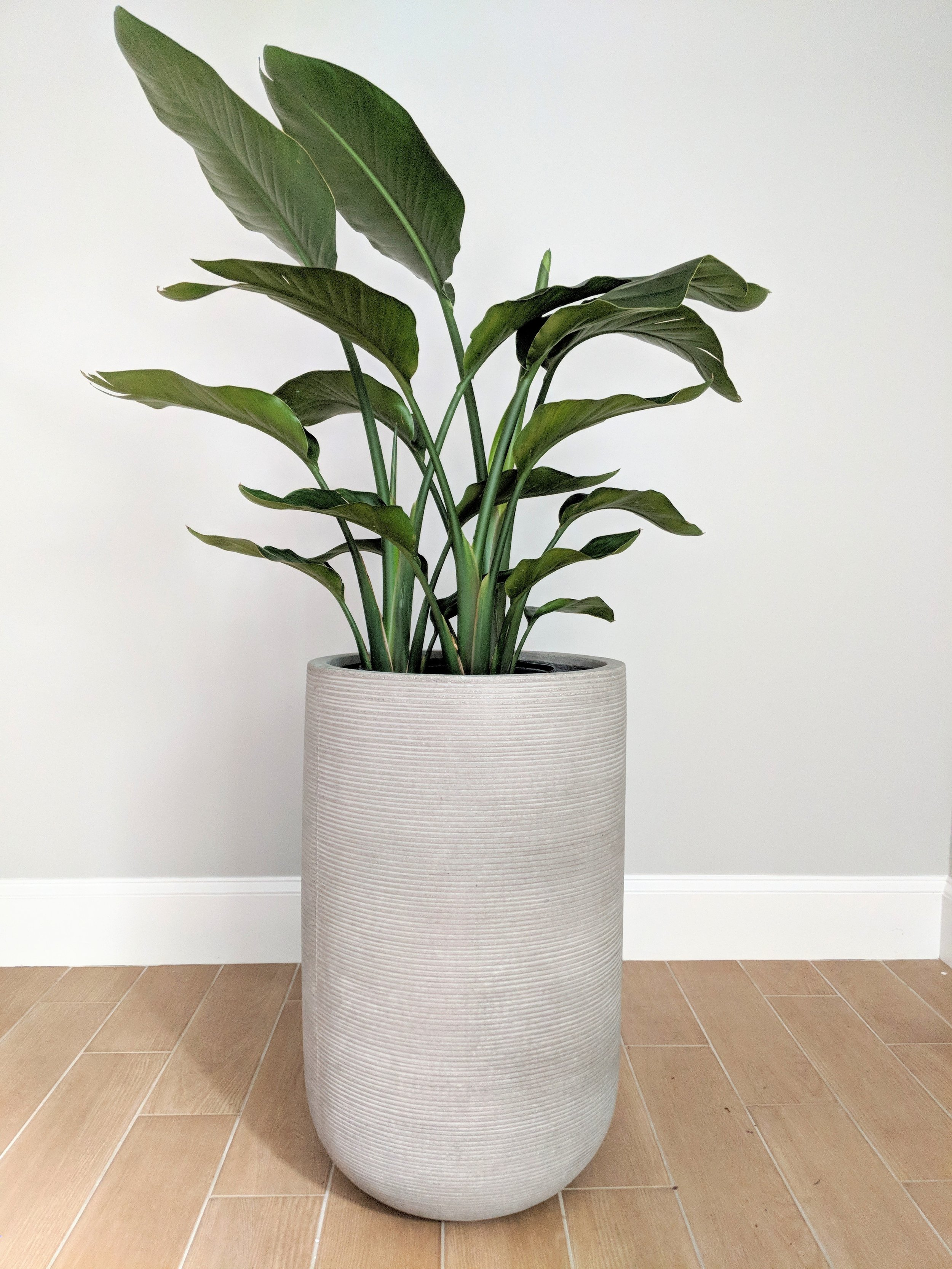 We select plants that will thrive in your space. -