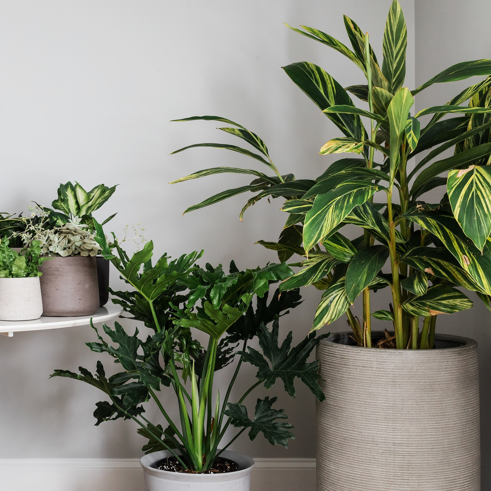 Curated Sources… Quality and Variety - We curate pottery and plants from manufacturers and growers to suit a range of design styles.We test plant varieties in controlled environments for months at a time so we are confident of their performance at clients' homes.