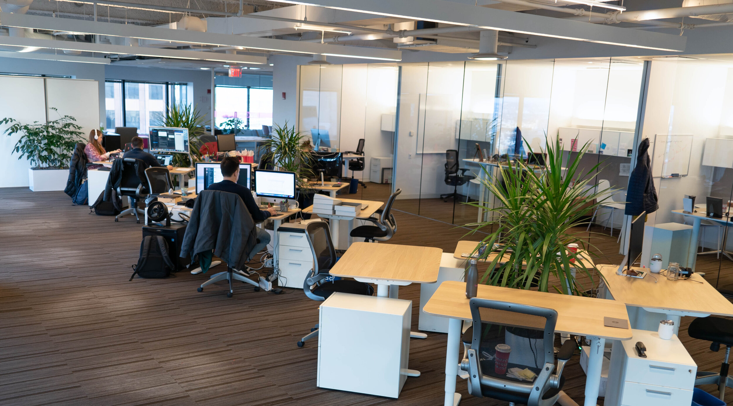 The Benefits Of Using Indoor Plants In An Open Office