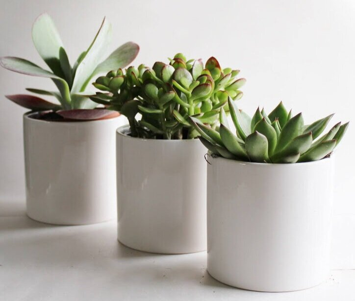 Our Corporate Gifting Program offers an easy way for sales and marketing  teams to connect with clients. A live desk plant is a gift from us. —  Garden Streets