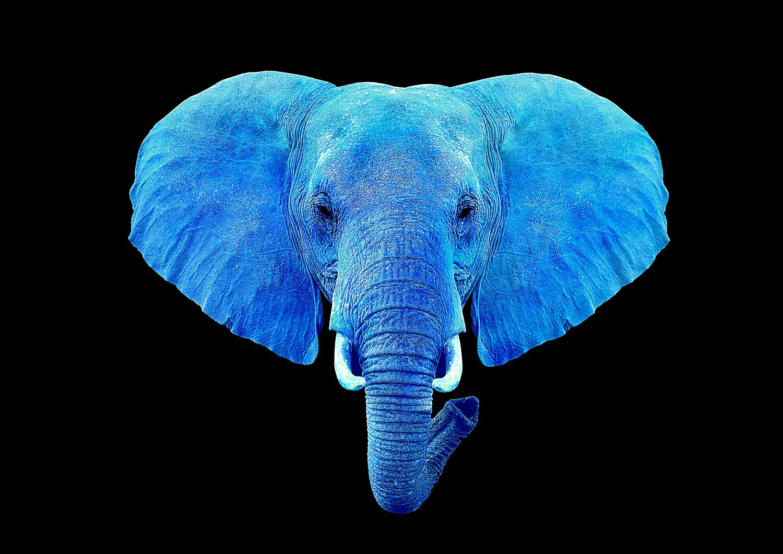 Bluu Elephant -