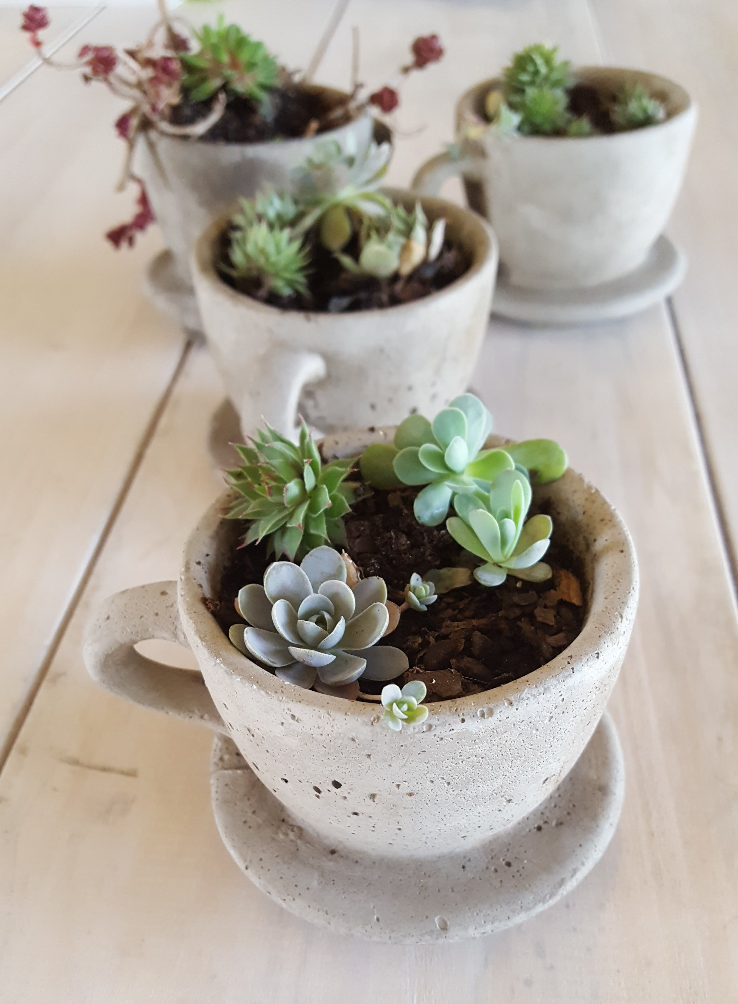 small succulents grow in a cement pot