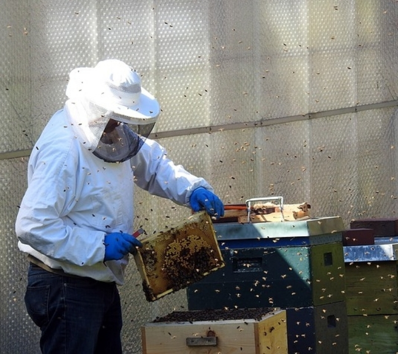 beekeeper-2156663_640.jpg