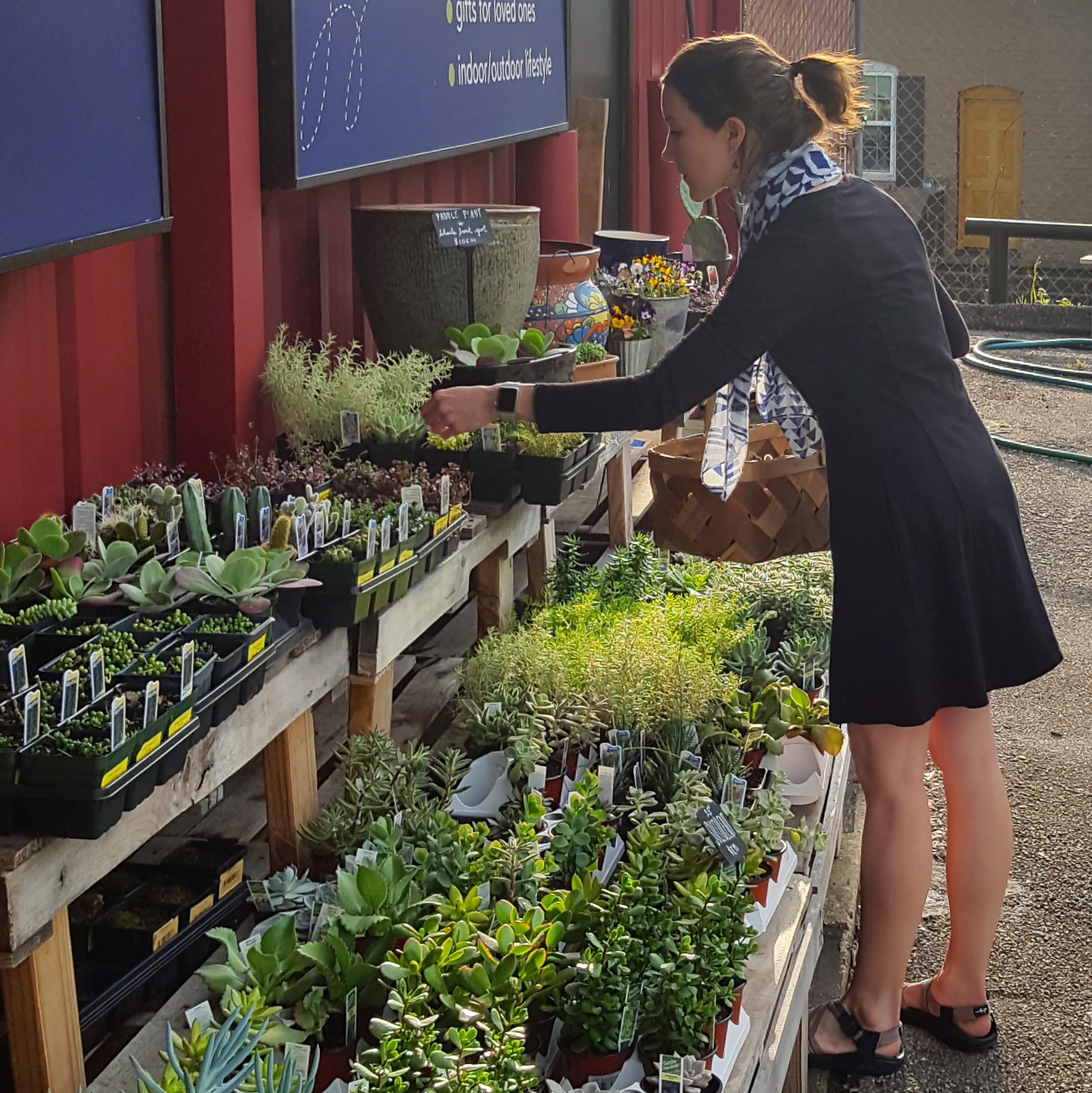 Succulents, succulent plants, plants, Chattanooga plants, Chattanooga garden center, container gardening, gardening, plant pot, planter.