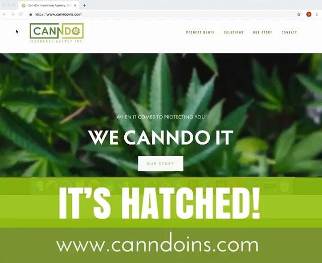 Loving this new hatched brand! We wish @canndoinsurance the best of luck in this new venture! Can't wait to help you succeed through design and marketing 😁 #letithatch #newbrand #startup #cannabisinsurance #wecanndoit