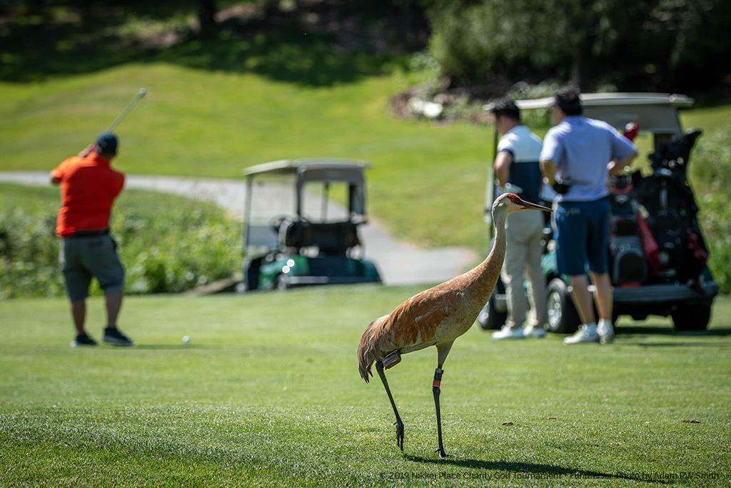 190531 2019 Nikkei Golf Tournament 15-14-47-2 - Photo by Adam PW Smith.jpg