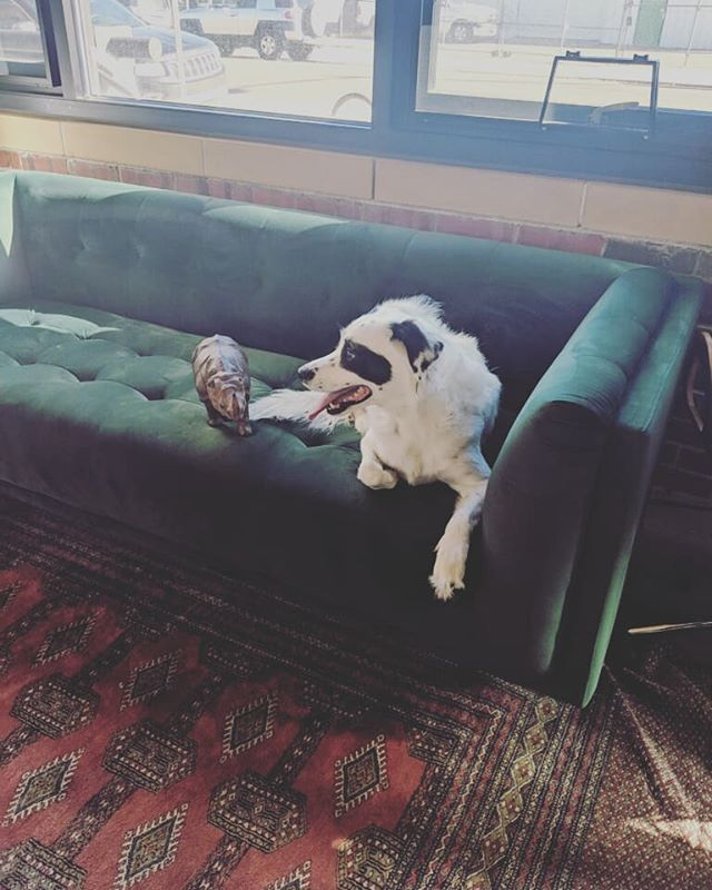 Ruff day at the #office. #dogsofinstagram . . #coworking #corporate #collaboration #businesslaw #denver #entrepreneurs #entrepreneur #startuplawyer #startup #rino #colorado #femalefounder #startuplife #startupgrind #ladyjustice #mediation #corporatelaw #legalcoworking #womeninbusiness #cryptocurrency #bitcoin