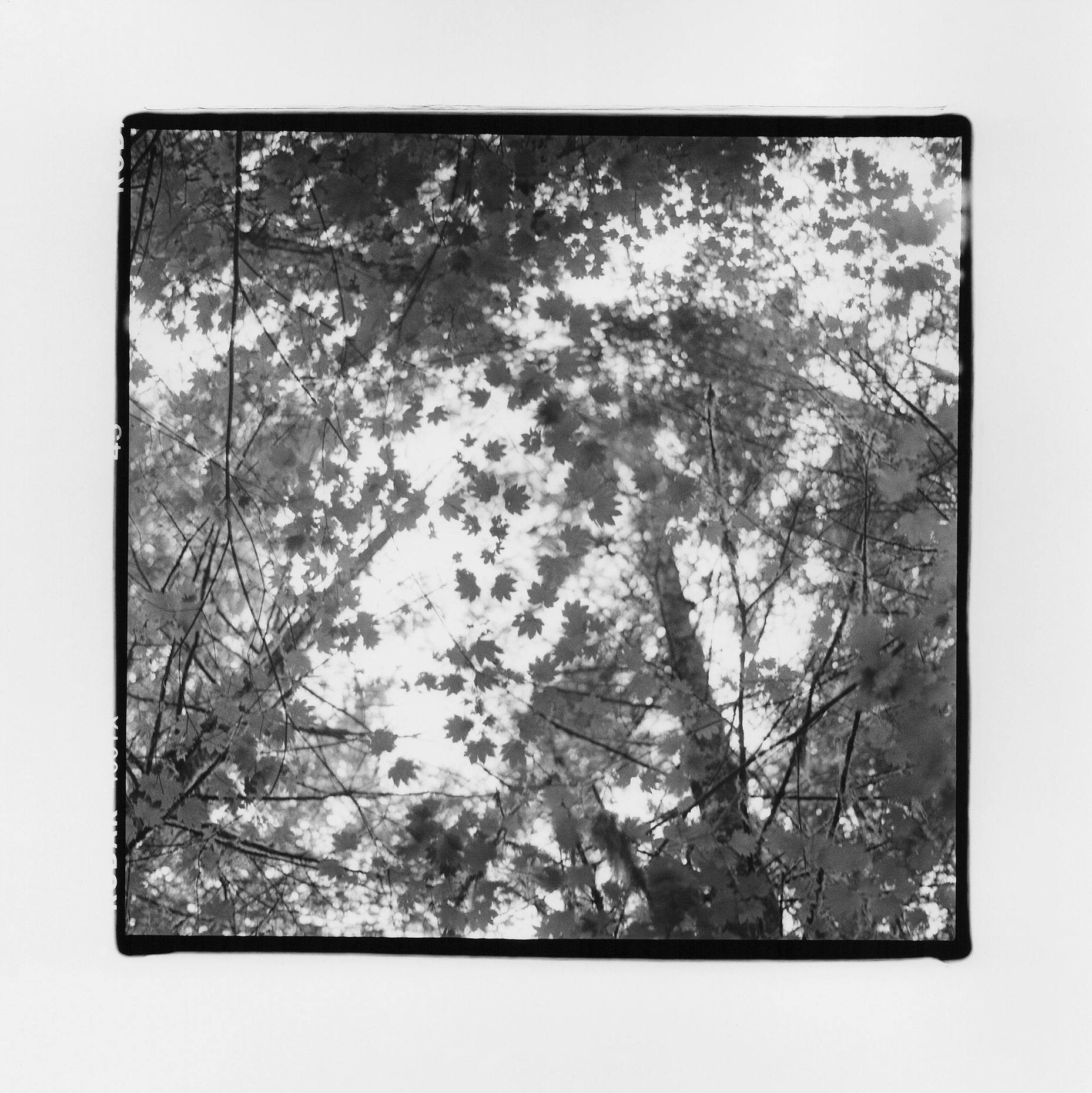Amen Ellis  MAPLE / 2018, silver gelatin print ( source )