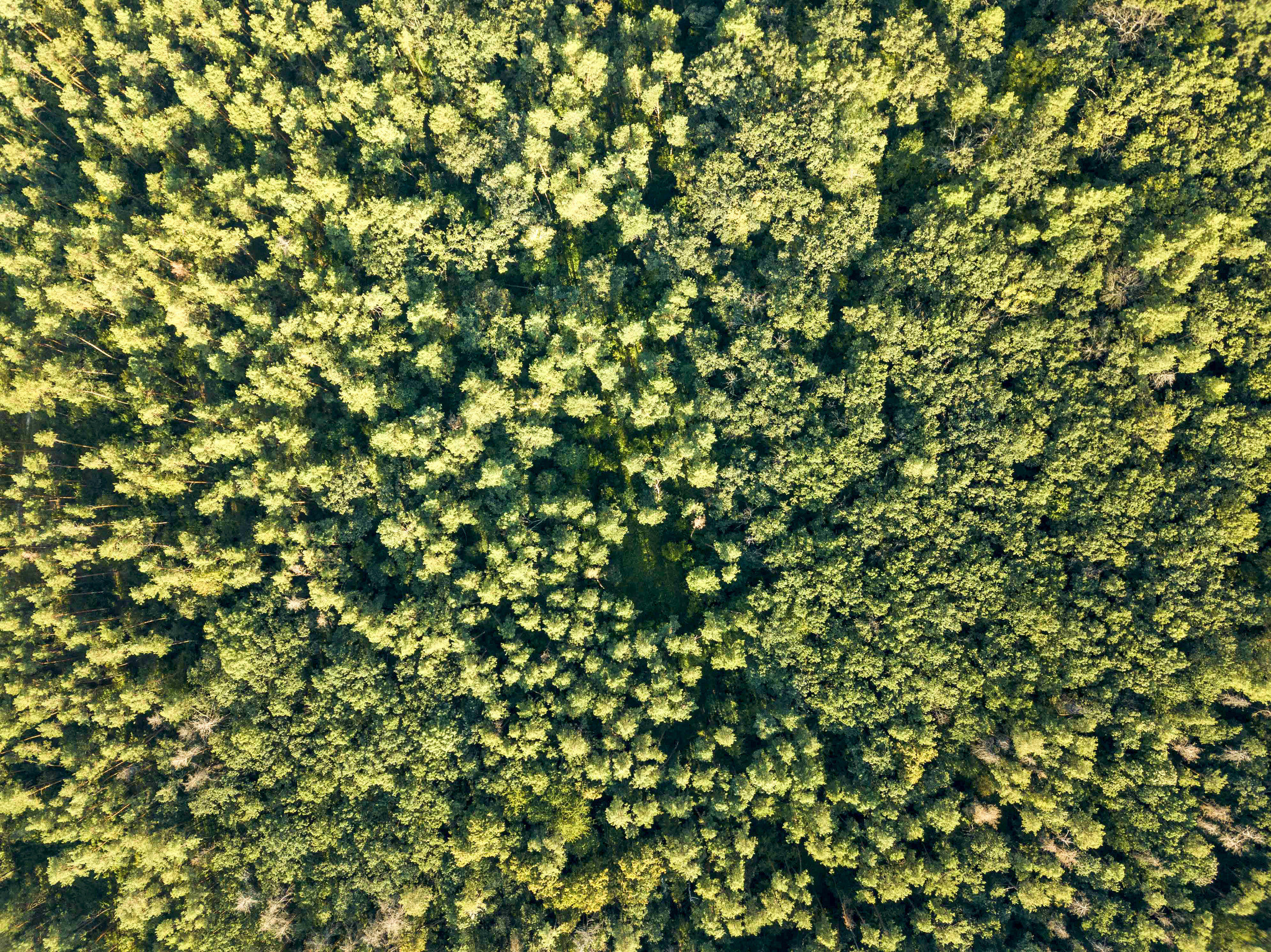 aerial-photograph-of-a-summer-day-on-green-P34V56B.jpg