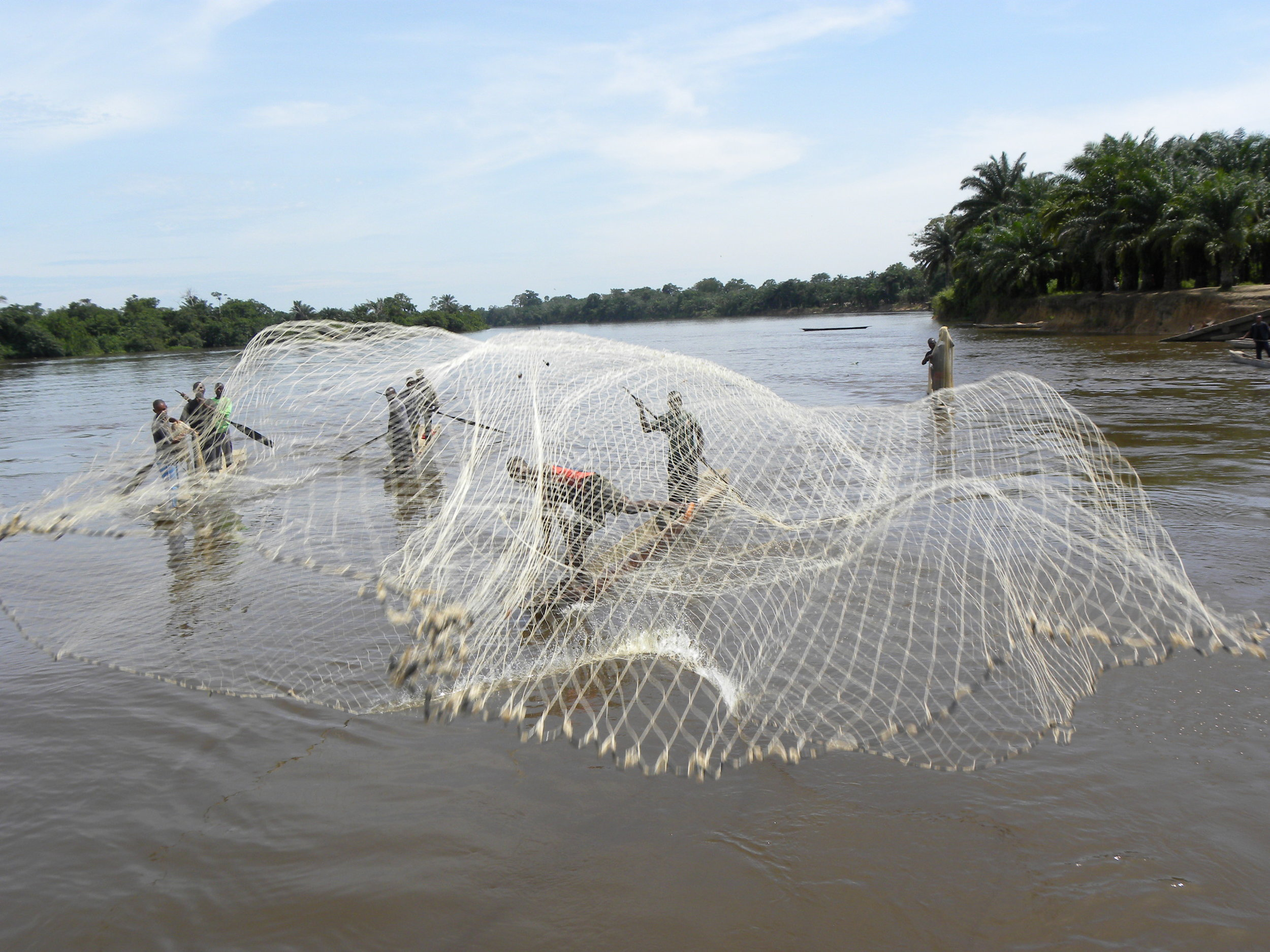 Field Highlight - Mindful of a protein scarcity typically leaving 70% of the population under-nourished, Jadora has collaborated with local foresters, community leaders, and women's groups to pilot the planting of dozens of 'butterfly trees' near villages and has installed 18 tilapia ponds in swampy-lowlands. These activities yield thousands of pounds of edible protein annually, along with other co-benefits:- Reduces vulnerabilities for women and girls traveling deep into the forest to acquire protein- Provides high-quality, reliable protein sources while pioneering a 'locally owned' platform for discussions on nutrition and food equity- Helps transition villagers from wild animals to domesticated foods; reducing illegal bush meat hunting- Creates alternate income streamsThe tilapia ponds and butterfly tree projects have become one primary focus of participating villages, and the envy of the villages not yet on board.