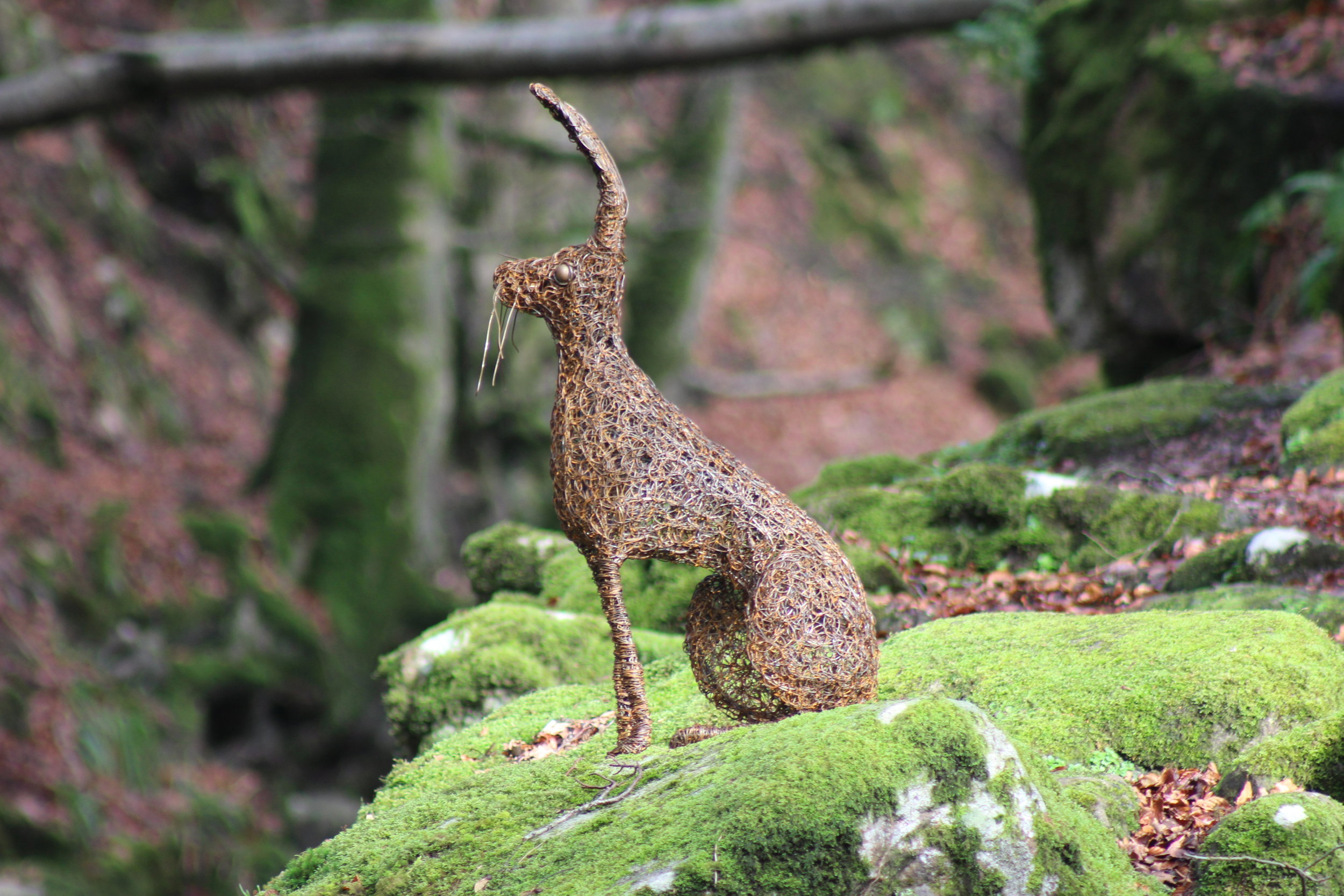 Sitting Hare.jpg