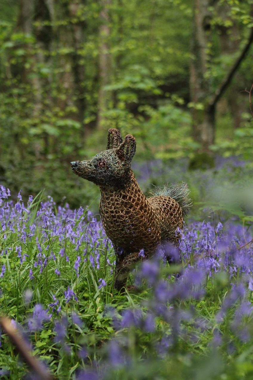 fox in the bluebells 3.jpg