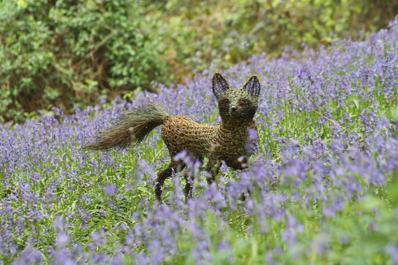 fox in the bluebells 6.jpg