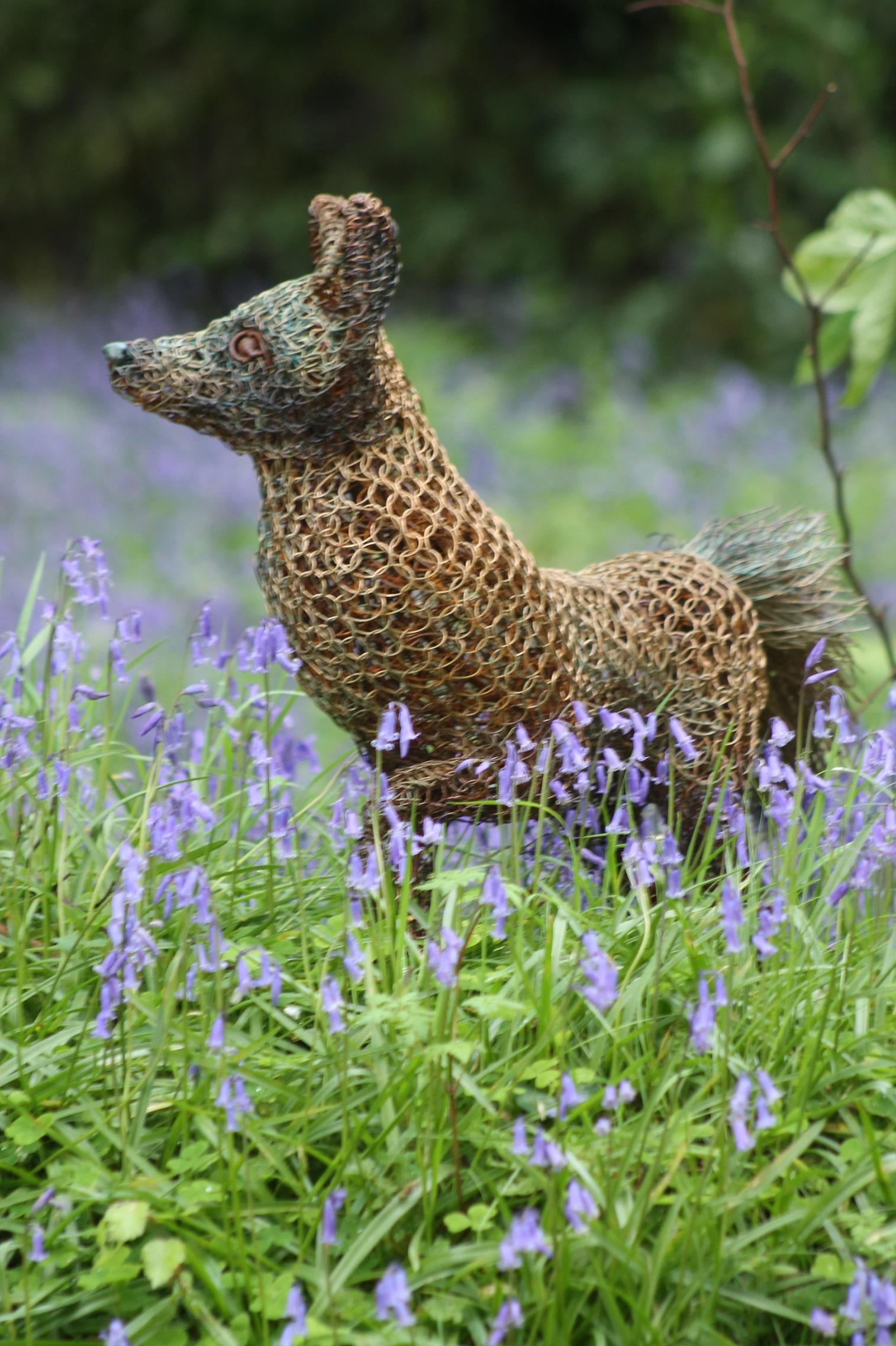 fox in the bluebells 5.jpg