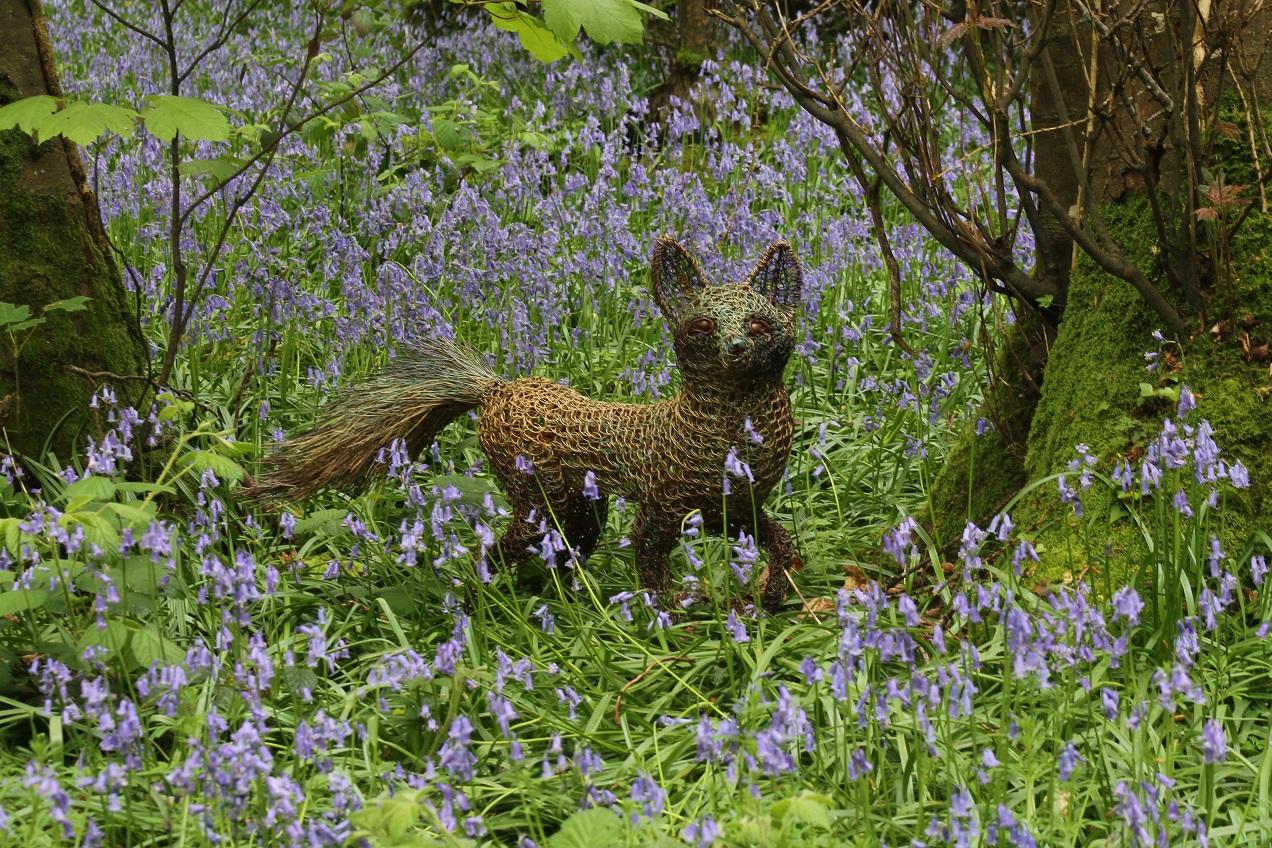 fox in the bluebell 1.jpg