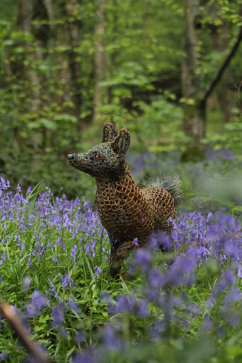 fox in the bluebells 3.jpg