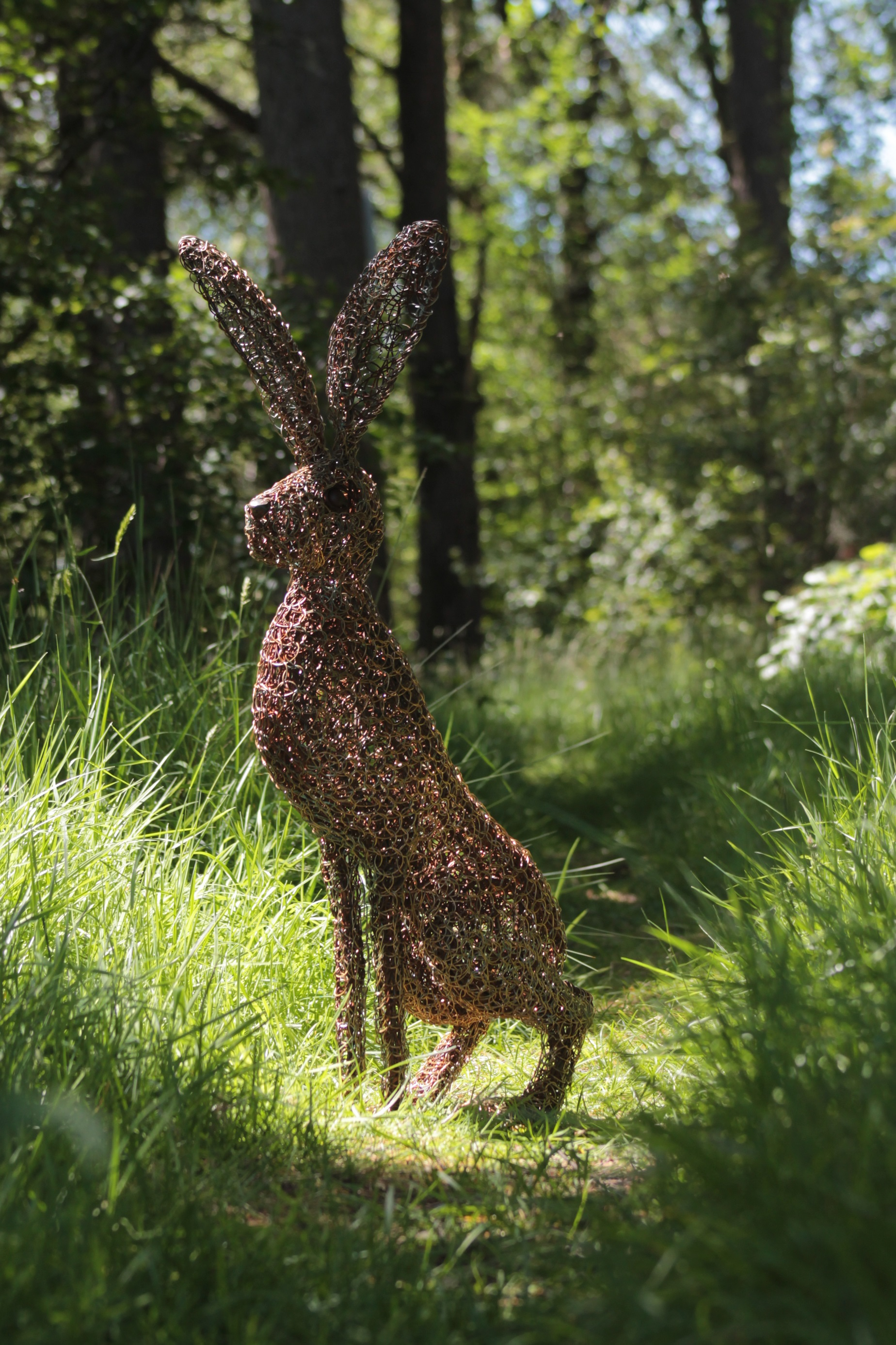hare in the grass and sunlight..jpg