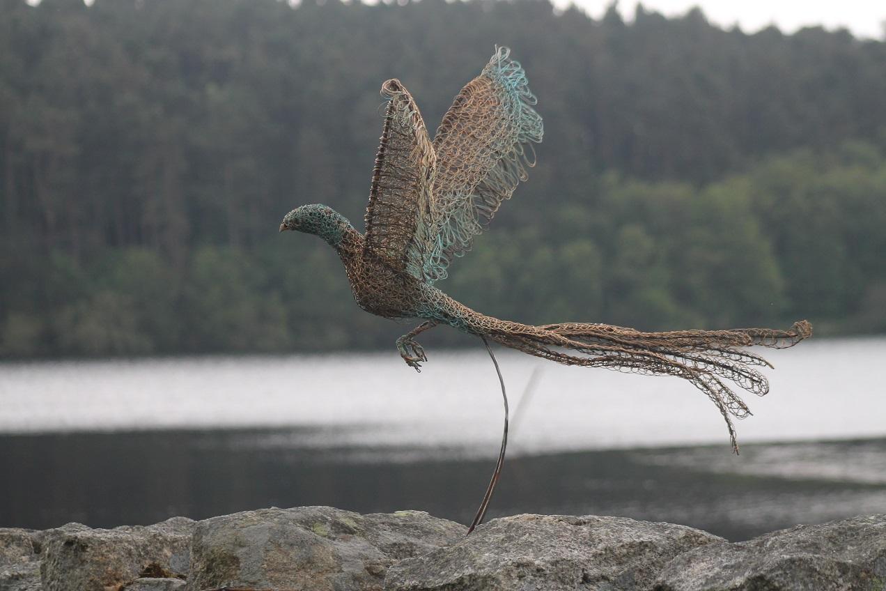 pheasant 1.jpg