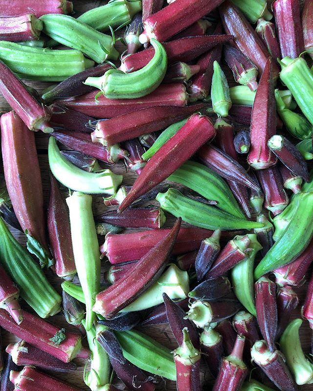 Enjoying a moment here... #okra #okralove #purpleokra