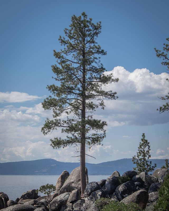 This is Lake Tahoe. Also, I just uploaded a new video called Once Upon A Time Hollywood. It's an embarrassing story about a run in I had @carmenelectra I hope you and her like it. Link is in my bio.  #Tahoe #laketahoe #lake #tree #onceuponatimeinhollywood #onceuponatime #hollywood #carmenelectra #story #truestory #funny #funnystory #embarrassing #embarrassingstory #movies #movie #film #filmproduction #behindthescenes #filmmaking #canonm50 #comedy #comedyvideo #storytelling #storyteller #storytellers #youtubevideo #artdepartment