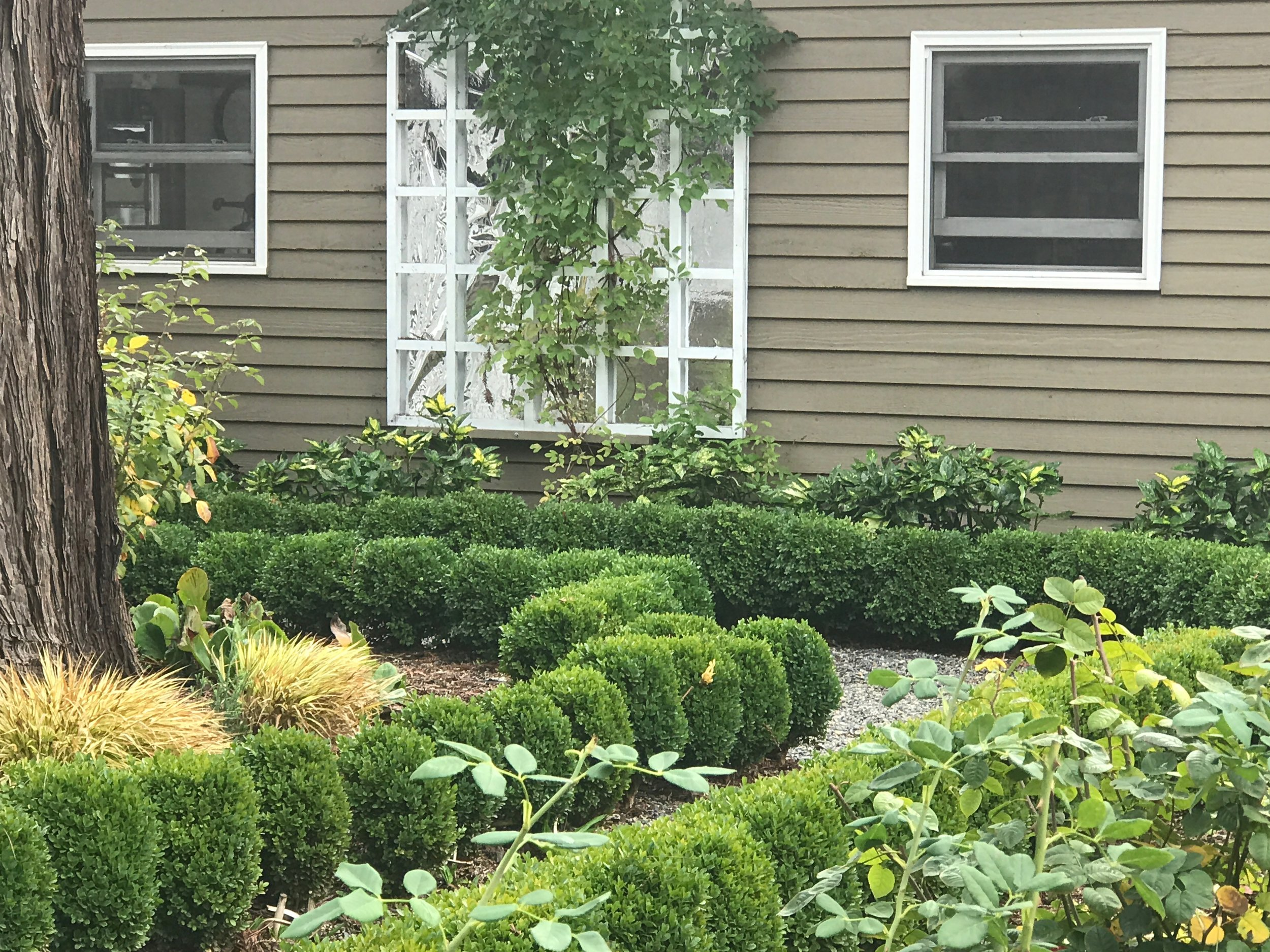 Highlighting the trellis with non breakable metallic feature laurel, boxwood, berengia some of the plantings .