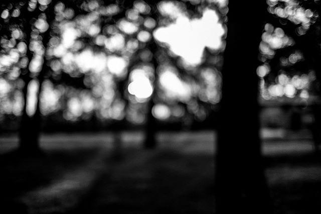 Focus . . . #myfujifilm #eyeshotmag #fujilove #curiouscameraclub #eyephotomagazine #fineartphotographer #contemporaryphotography #curious5k #photoobserve #lensculturestreets #spicollective #in_public_collective #vimptfreeprint #bnw_demand #bnw_planet #bnw_international #bnwlegit#bnwzone #bnw_greatshots#fineartphotography#burnmagazine#bnw_magazine #simply_noir_blanc #spg_bnw #fujifilmx_us#bnwphotography #bnw_greatshots #bnw_rose #bnw_planet_2019