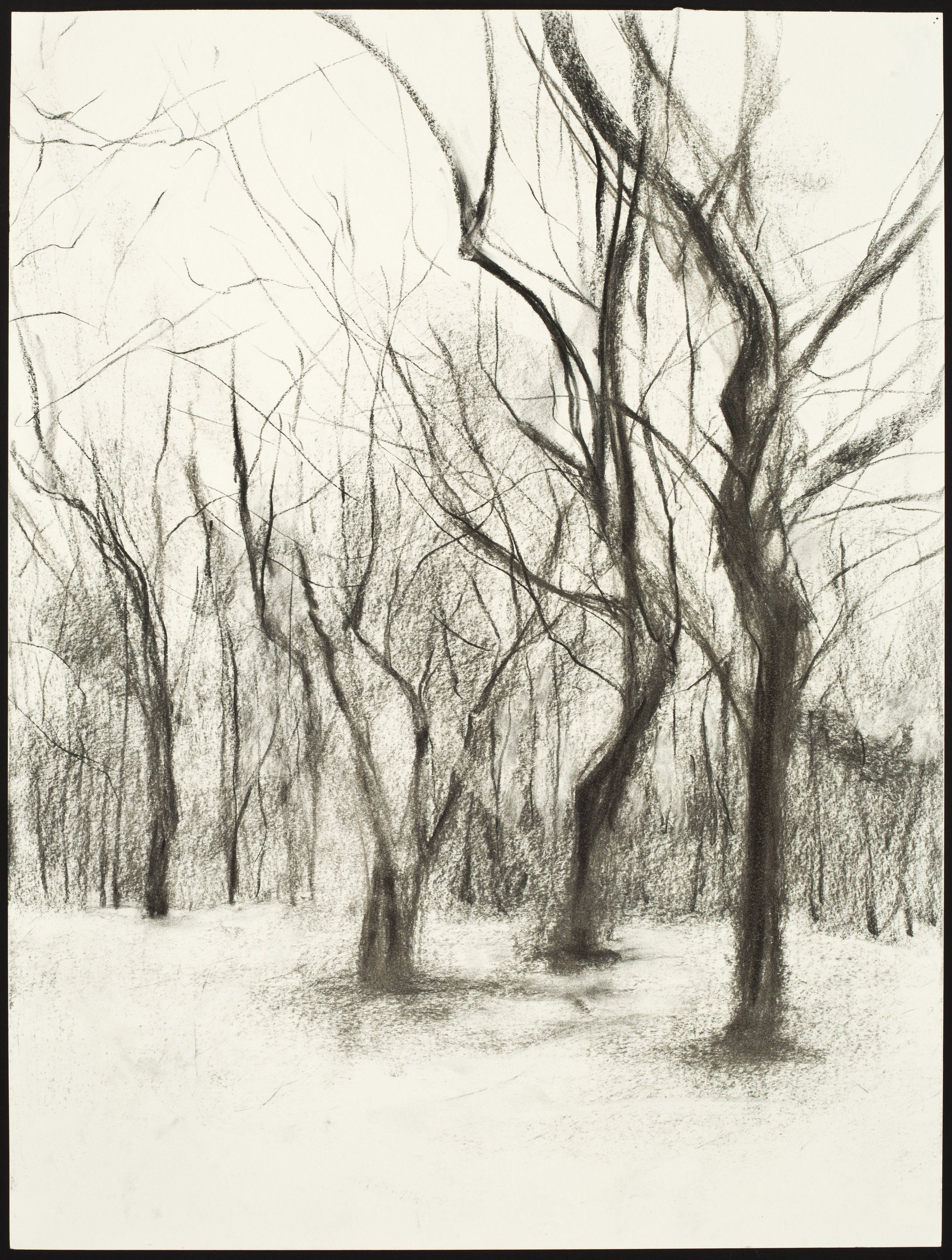 """Sweet Briar Trees #1  Charcoal on Paper (24x18"""")"""