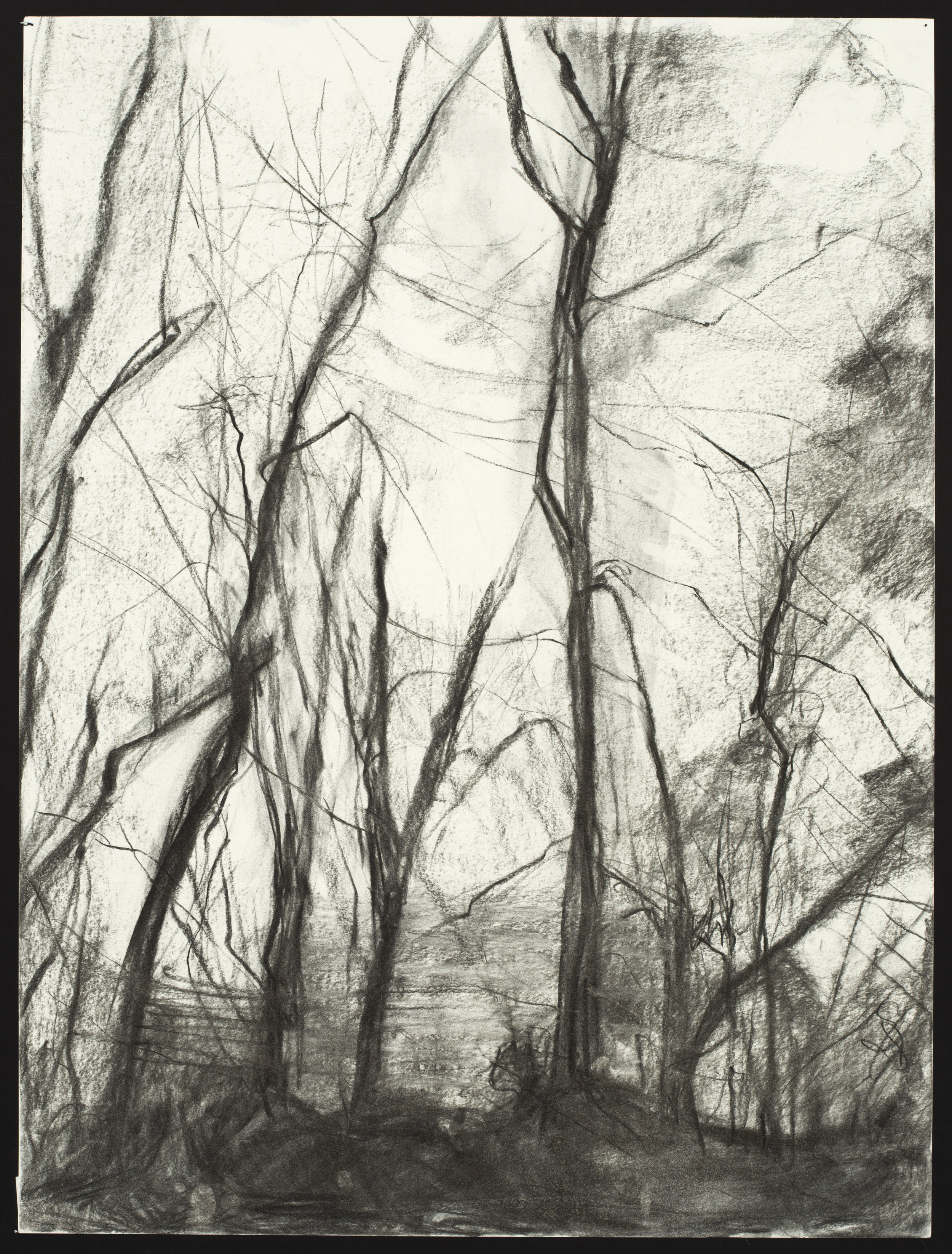 """Sweet Briar Trees #2  Charcoal on Paper (24x18"""")"""