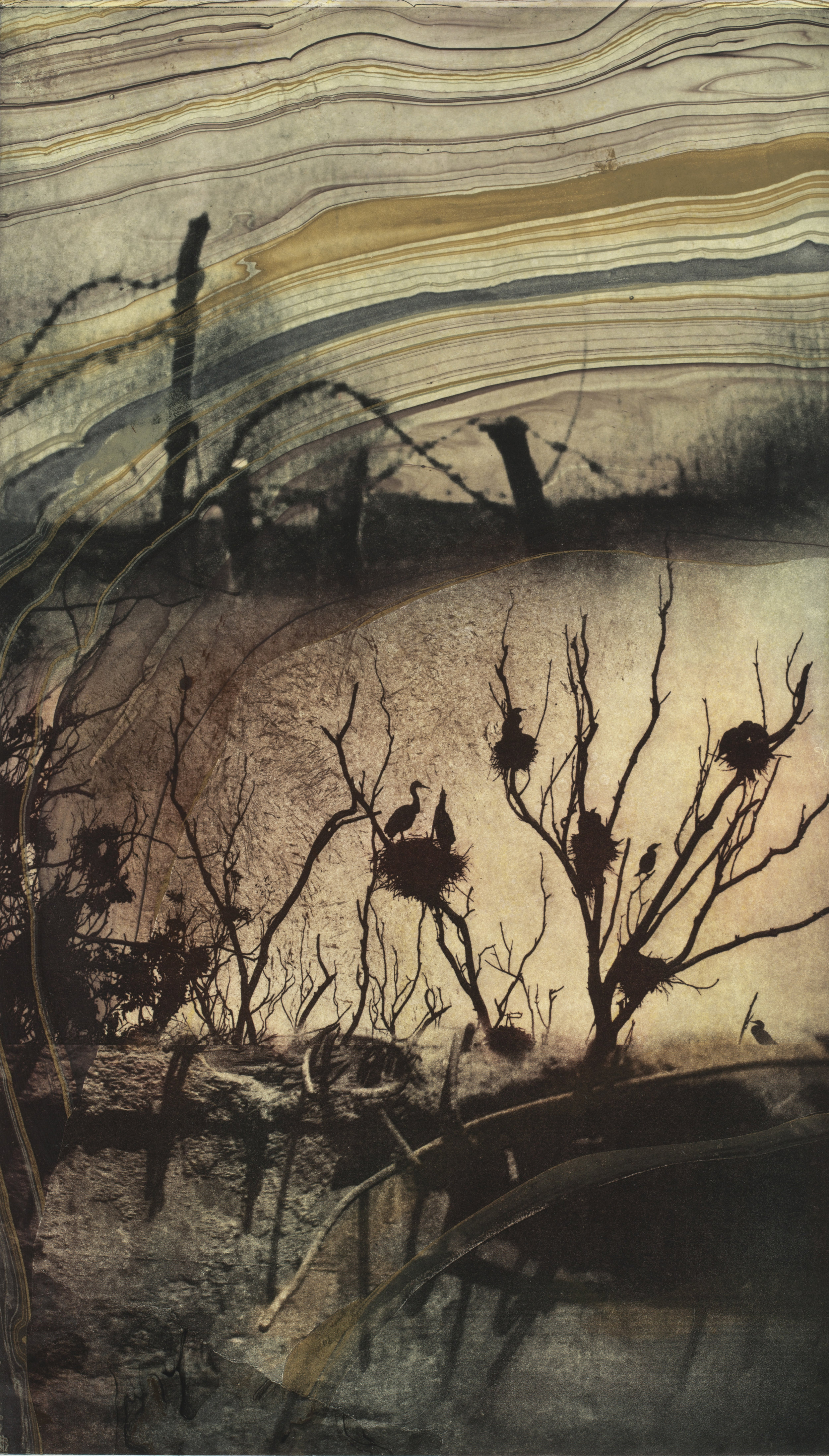 """Song of the Mud  Solarplate Etching w/ Chine Colle (16x10"""")"""