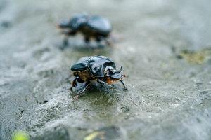 Dung+Beetle_SA904291_DIGITAL.jpg