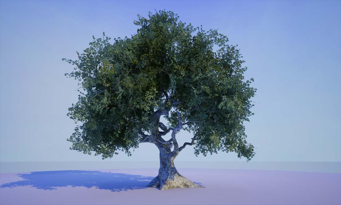 Oak Tree — Matthew Whaling